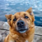 Dog at lake, pursue happiness