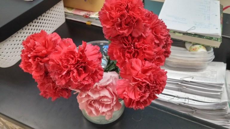 Carnation Sale