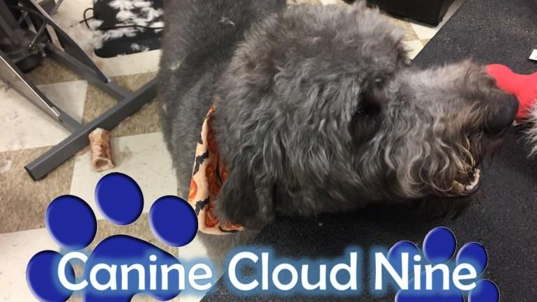 Canine Cloud 9 – MainStreet #4