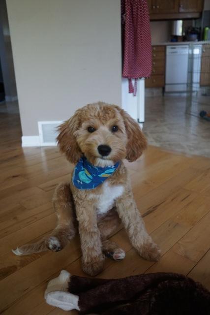 Odin's first haircut
