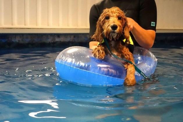 Odin Swimming