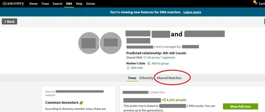how to find shared DNA matches on the new Ancestry DNA match profiles