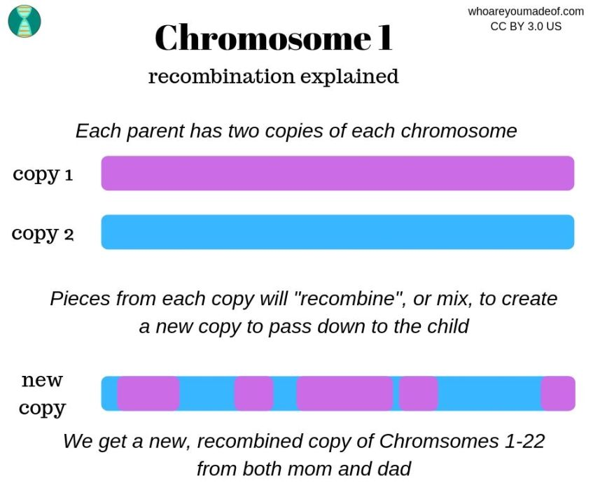how recombination works to make a new copy of a chromosome
