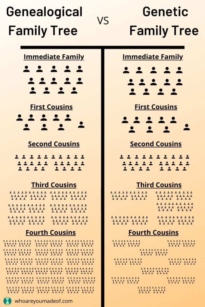 The genealogical family tree versus the genetic family tree.  Close and immediate family will always be on our genetic family tree, but more distant family might not