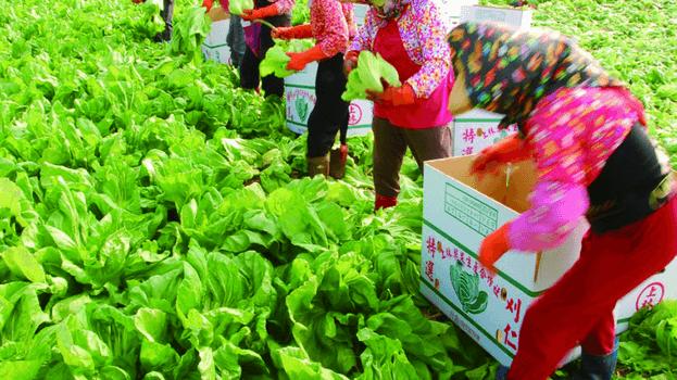 為什麼中國無法讓台灣農漁業發大財:談政治訂單及契作虱目魚