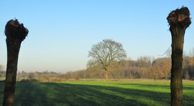 the willows, and a lonely oak