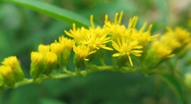 a bug's garden of eden
