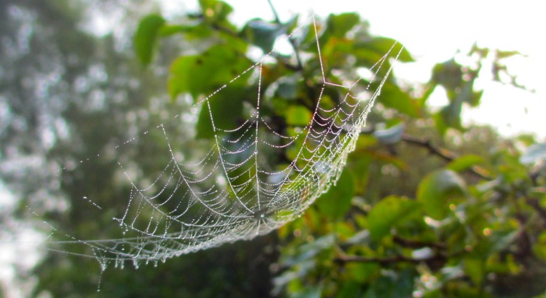 .. the spider's hammock .. (click to enlarge ...)