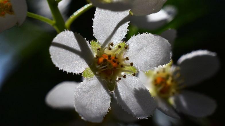 backlit hackberry flower .. (click to enlarge ..)