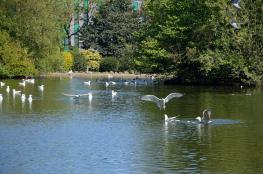 Wildlife in Sunderland