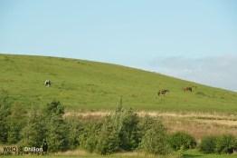 Horses Hill