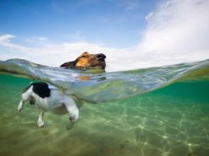 ocean-swimming-dog