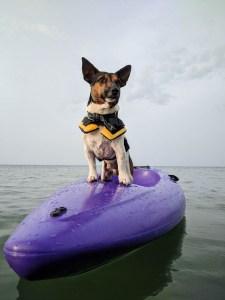 dog-ocean-lover-adventurer
