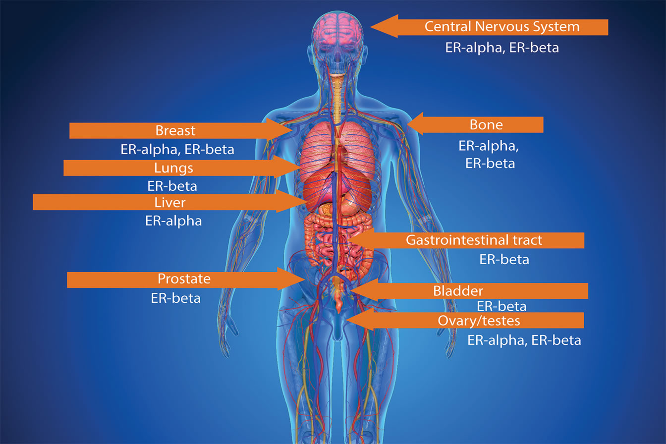 human heart and lungs diagram kia rio wiring stereo pueraria mirifica reducing cancer risk | whole foods magazine