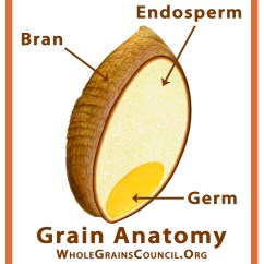 Grain Kernel Diagram Numbered Of Your Teeth What Is A Whole The Grains Council Parts