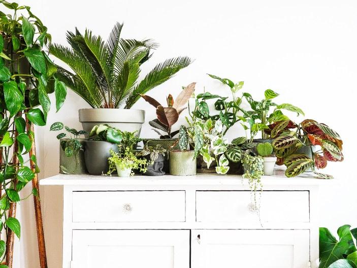 Houseplants & How Not to Kill Them!