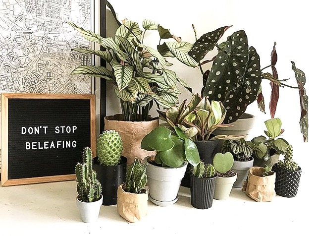 """A collection of Houseplants with the sign """"Don't Stop Beleafing"""""""