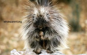 My Porcupine Period: Expressing Dissatisfaction In My Marriage