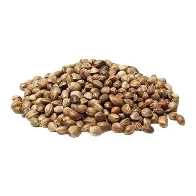 glendale marijuana seeds