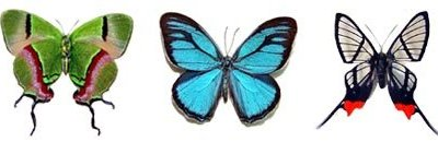 Butterflies_and_Moths_of_Central_and_South_America