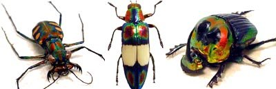 Real Framed Scarabs & Beetles From Around The World