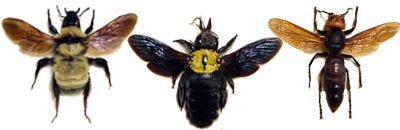 Real Framed Wasps Bees & Hornets from Around The World