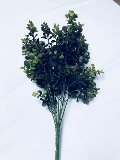 Eucalyptus Tealeaf Bush
