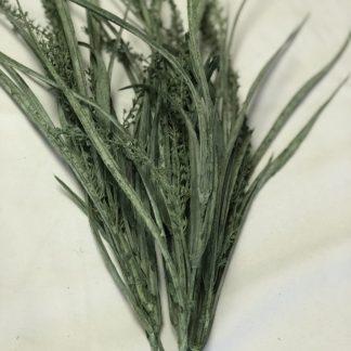 Seeded Grass Bush