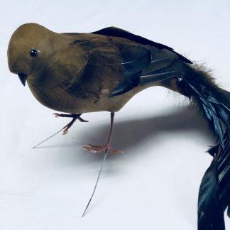 brown feather bird