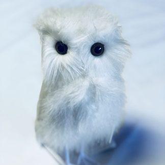 white feather owl