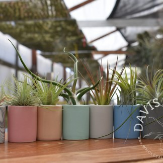 Ceramic pots for Tillandsias
