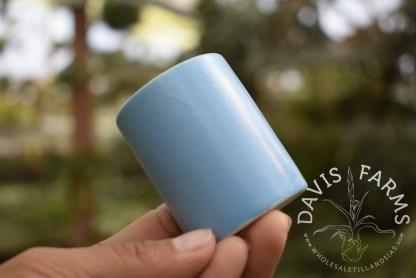 Ceramic pots for Tillandsias