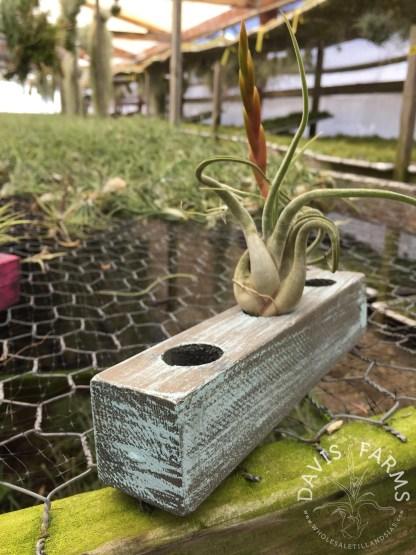 Handcrafted Wooden Pots Davis Farms Wholesale Tillandsias