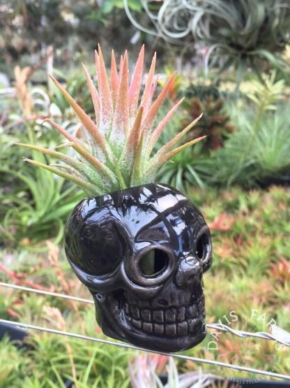 Halloween black skull ceramic