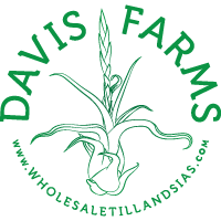 Davis Farms Wholesale Tillandsias