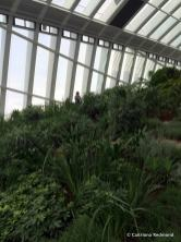 Beautiful lush gardens inside The Sky Garden.