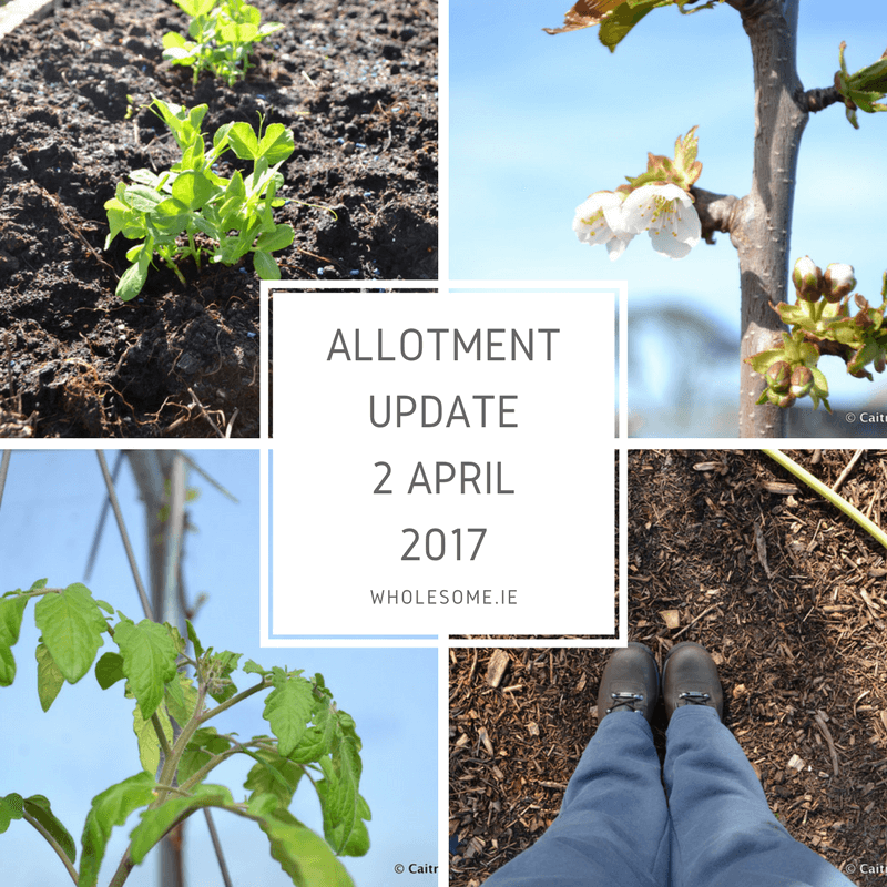 Allotment Update 2 April 2017 #Ad