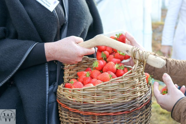 Strawberries, gin, jam, visit to Clarkes Fruit Farm, North Fingal Women in Business