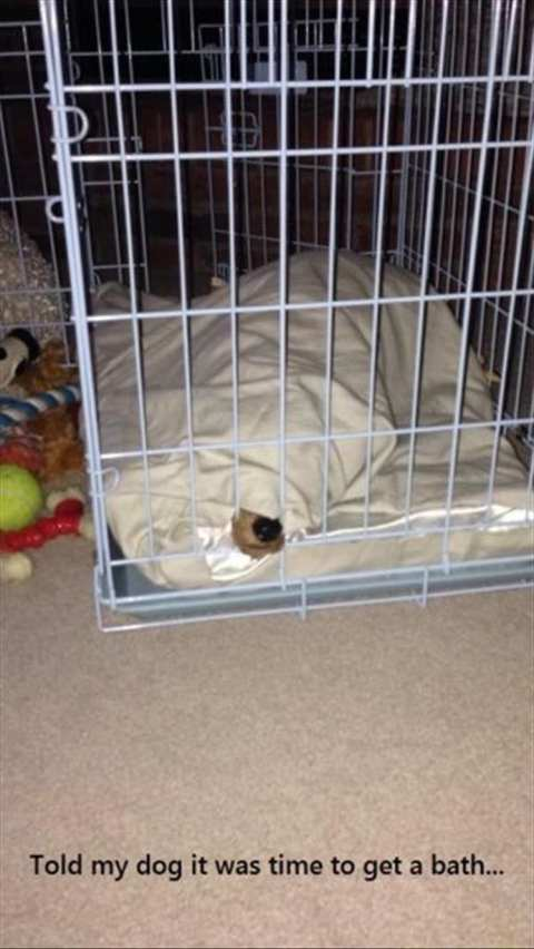 Dog all covered up with blankets inside crate.