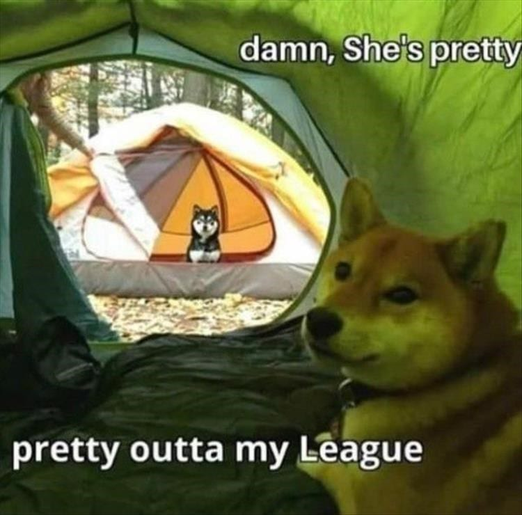 Huskies in two different tents.