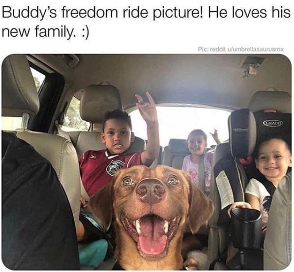 Dog smiling wide inside van with 3 kids.