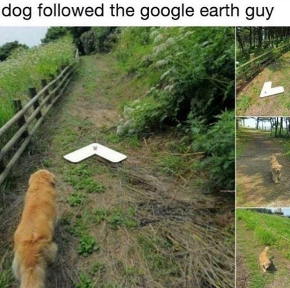 Golden Retriever walking in the woods the the google person.