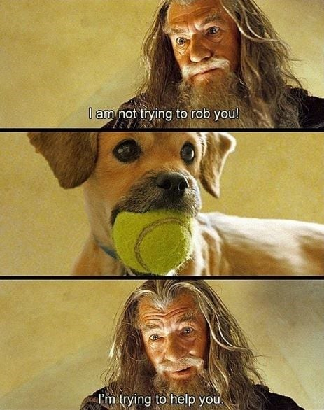 Funny bone of dog trying to play fetch.