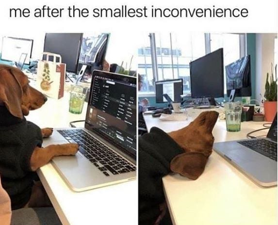 Dog typing at a computer in one pic and the next pic has their head on the desk.