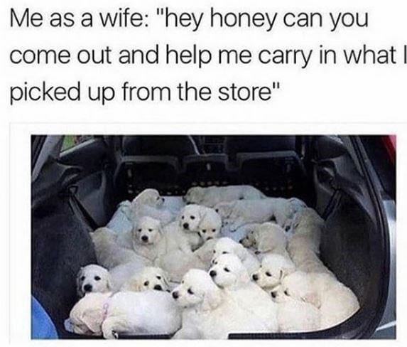 16 puppies in back of car.