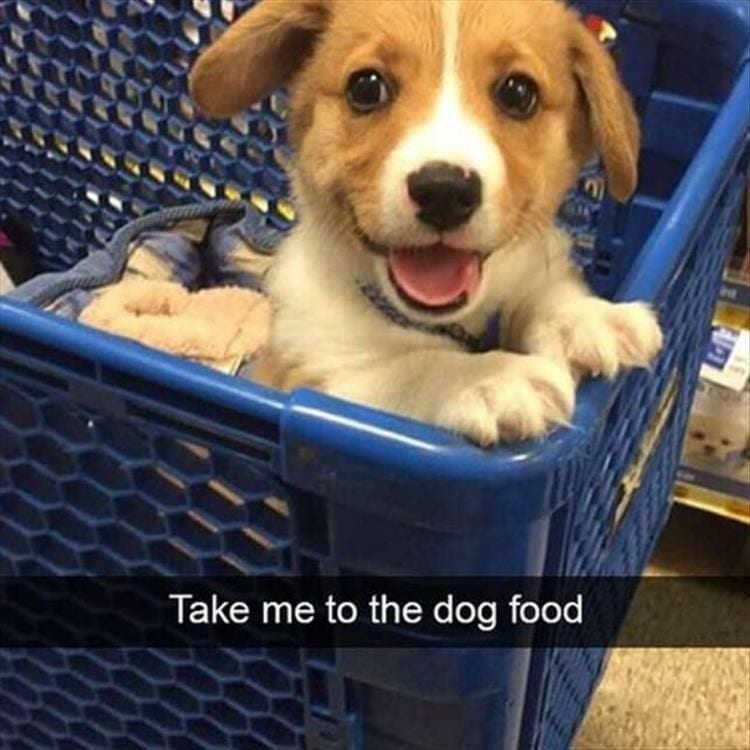 Puppy shopping in a pet store.