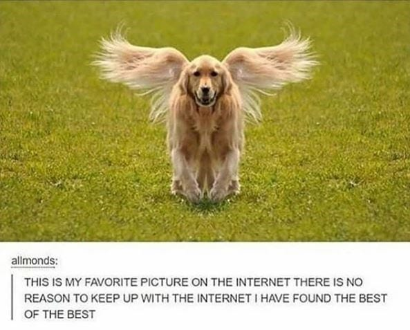 Golden Retriever walking in green grass with a snapshot of tail looking like wings.