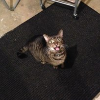 Meowing for food