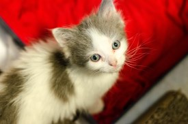 kittens-2