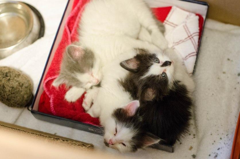 kittens-6